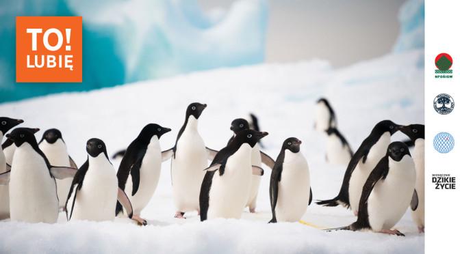 lubieto_pingwiny