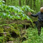 Dr Bogdan Jaroszewicz ze Stancji Geobotanicznej UW w Białowieży opowiada o roli martwego drewna w lasach.