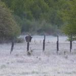 Opłaciło się wstać o 3.30! Przy wejściu do Białowieskiego Parku Narodowego przywitał nas żubr.