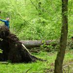 Takie widoki tylko w Puszczy Białowieksiej. Martwe drewno jest równie ważne, jak żywe drzewa i tak samo spektakularne.